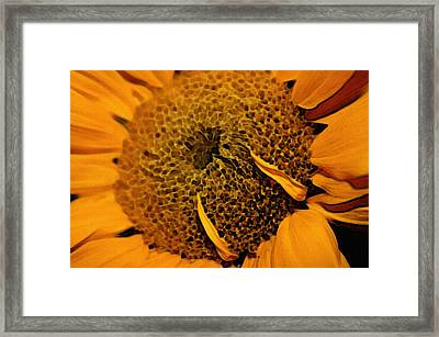 Framed Print featuring the photograph Sunflower Painting by Ellen Tully