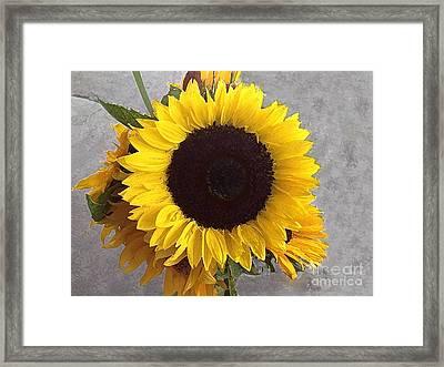 Sunflower Photo With Dry Brush Filter Framed Print