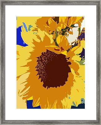 Sunflower Pop Framed Print by Colleen Kammerer
