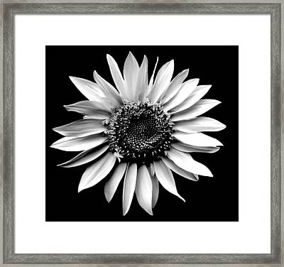 'sunflower Portrait' Framed Print