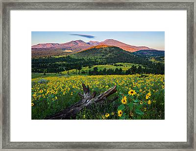 Sunflower Power Framed Print by Guy Schmickle