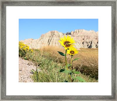 Sunflower Framed Print by Robin Williams