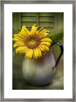 Sunflower Series I Framed Print by Kathy Jennings