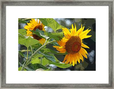 Sunflower Series II - Enhanced Framed Print by Suzanne Gaff