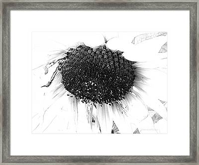 Sunflower - Simply Sweet Framed Print by Janine Riley