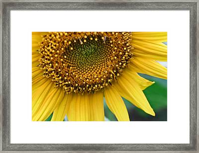 Sunflower Smiles Framed Print by Julie Andel