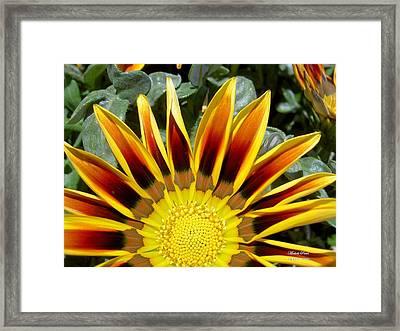 Sunflower Smiling Limited Edition Framed Print