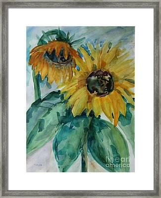 Sunflower - Sold Framed Print