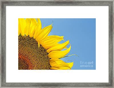 Sunflower Framed Print by Stela Taneva