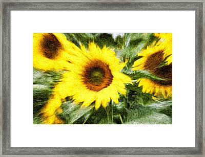 Sunflower Study 3 Framed Print by Mitchell Brown