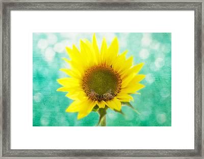 Sunflower - Sun Kiss 2 Framed Print by John Hamlon