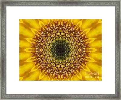Sunflower Sunburst Framed Print by Annette Allman