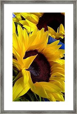 Sunflower Sunny Yellow In New Orleans Louisiana Framed Print