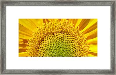 Framed Print featuring the photograph Sunflower Sunrise by Michael Dohnalek