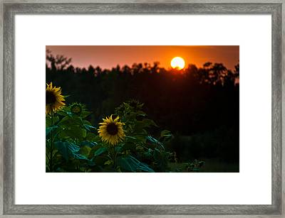 Sunflower Sunset Framed Print by Cheryl Baxter