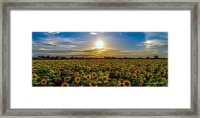 Sunflower Sunset Framed Print by Mike Ronnebeck