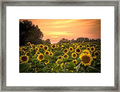 Framed Print featuring the photograph Sunflower Sunset by Steven Bateson