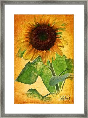 Sunny Sunflower Framed Print by Carol F Austin