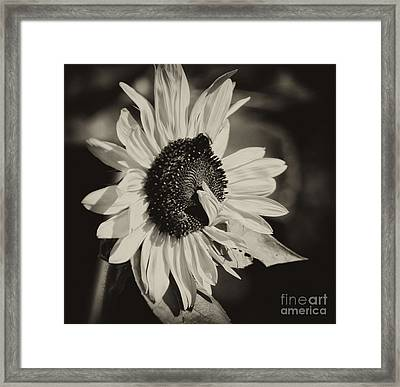 Sunflower Suprise Framed Print by Wilma  Birdwell