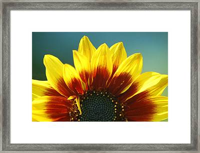 Framed Print featuring the photograph Sunflower by Tam Ryan