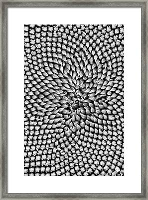 Sunflower Texture  Framed Print by Tim Gainey