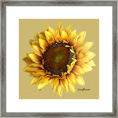 Framed Print featuring the digital art Sunflower by Tom Romeo