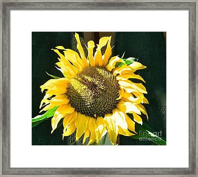 Sunflower Framed Print by Virginia Ann Hemingson