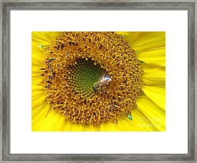 Sunflower Visitor Series 2 Framed Print