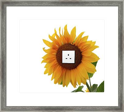 Sunflower With An Electrical Socket Framed Print
