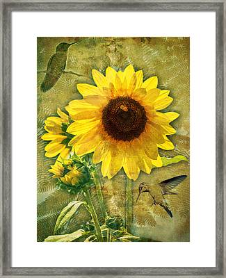 Framed Print featuring the photograph Sunflower With Bee Number Nineteen by Bob Coates