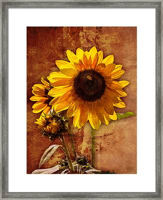 Framed Print featuring the photograph Sunflower With Bee Number Two  by Bob Coates
