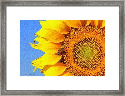 Sunflower With Bee Framed Print
