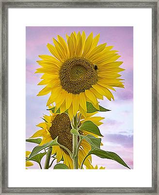 Sunflower With Colorful Evening Sky Framed Print