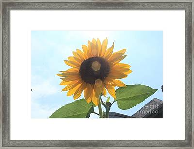 Sunflower With Flare 1 Framed Print by Lotus