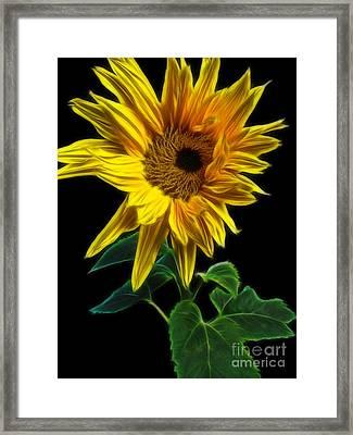 Sunflower Framed Print by Yvonne Johnstone