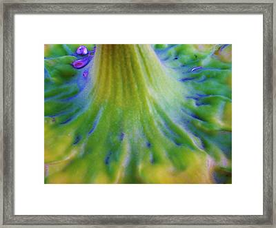 Framed Print featuring the photograph Sunflower...moonside 2 by Daniel Thompson