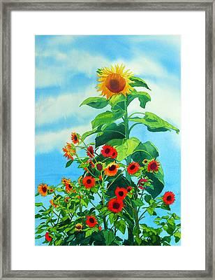Sunflowers 2014 Framed Print