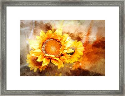Sunflowers Aglow Framed Print by Mary Timman