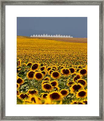 Sunflowers And Airports Framed Print
