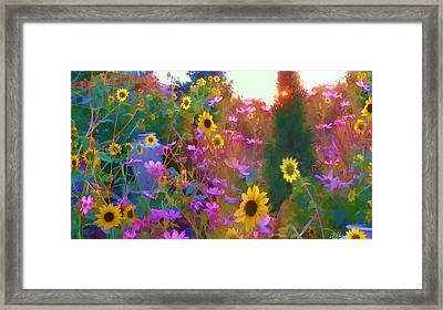 Sunflowers And Cosmos Framed Print