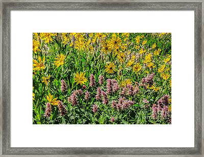 Sunflowers And Horsemint Framed Print by Sue Smith