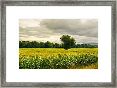 Sunflowers And The Tree Framed Print