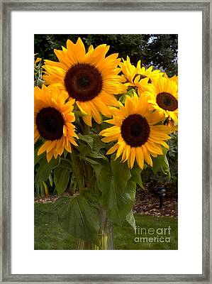 Framed Print featuring the photograph Sunflowers by Arlene Carmel