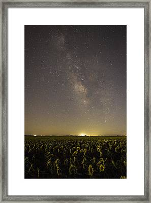 Sunflowers At Night Framed Print by Chris Harris