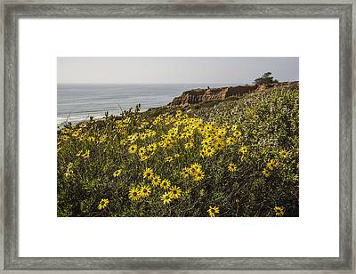 Framed Print featuring the photograph Sunflowers At Yucca Point by Lee Kirchhevel