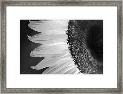 Sunflowers Beauty Black And White Framed Print by Sandi OReilly
