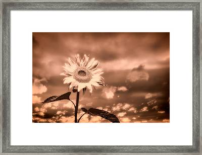 Sunflowers Framed Print by Bob Orsillo