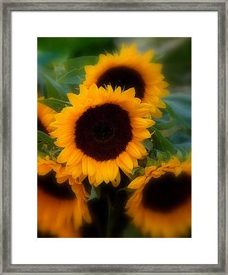 Framed Print featuring the photograph Sunflowers by Caroline Stella