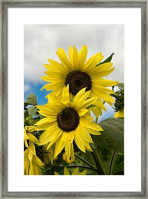 Framed Print featuring the photograph Sunflowers by Chuck De La Rosa