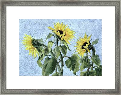 Sunflowers Framed Print by Cristiana Angelini